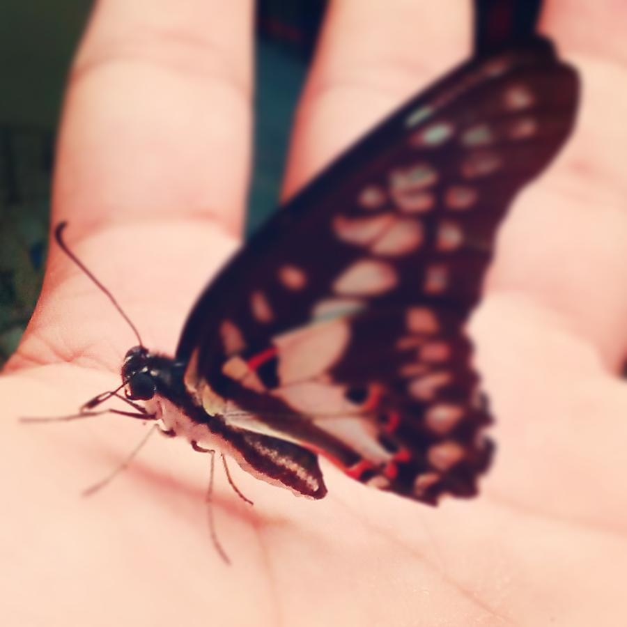 #tittli #butterfree #pokèmon #freedom #instabug #rtsa #lunchtime #baarish #shelter #instapic #dreamlife #magicwings #wannafly #naturesbeauty