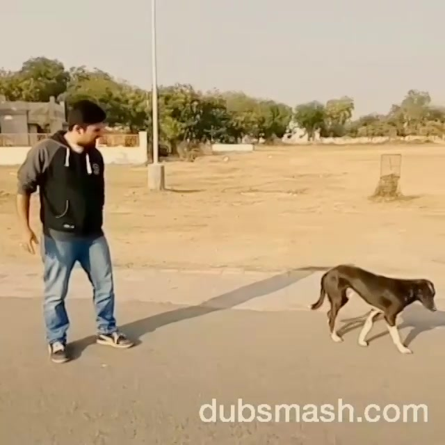 This is how it looks when #sunnydeol alone is facing the villains ... #girls please note that I gave biscuits to the dog before and after the shoot so plz dnt #awww on me  #Nautanki #ghatak #bollywooddubsmash